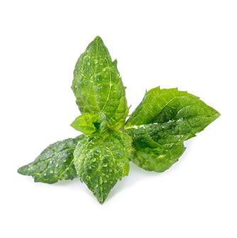 Menta verde ricarica Lingot per orto Véritable
