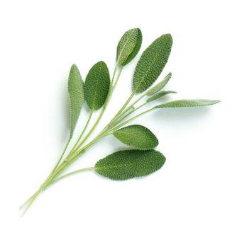 Salvia ricarica Lingot per orto Véritable