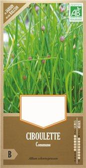 Semi di erba cipollina comune